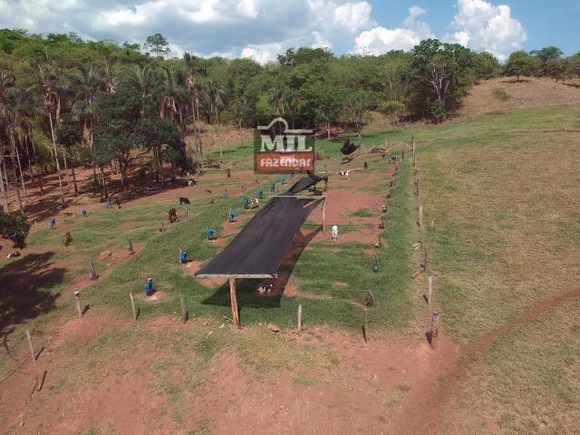 Fazenda 24 Alqueires ( 116.16 hectares )- Santa Cruz \ Cristianópolis-GO - Foto 8