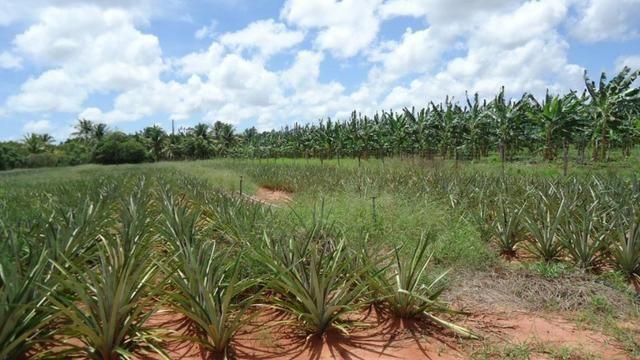 Vendo Fazenda com 250 ha, no Município de Touros - Foto 9
