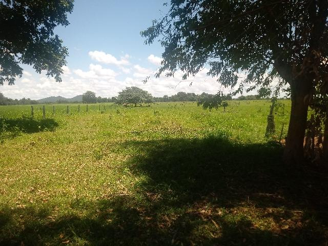 Chacara - Foto 8