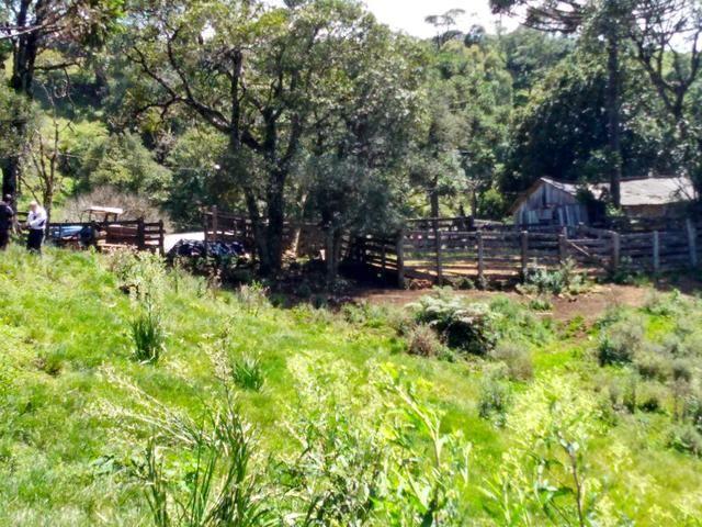 Fazenda de 123 Alqueires .40 Alq de Pasto . Guará ( Guarapuava PR ) - Foto 14