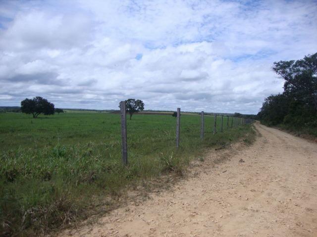 Fazenda em Pedro Afonso - 270 km Distante de Palmas - Foto 13