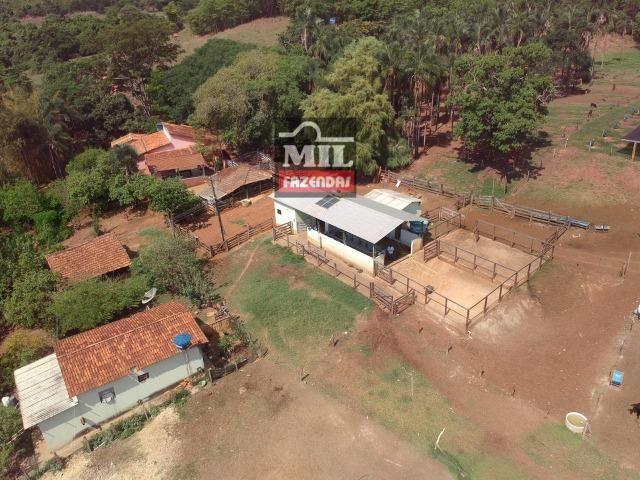 Fazenda 24 Alqueires ( 116.16 hectares )- Santa Cruz \ Cristianópolis-GO