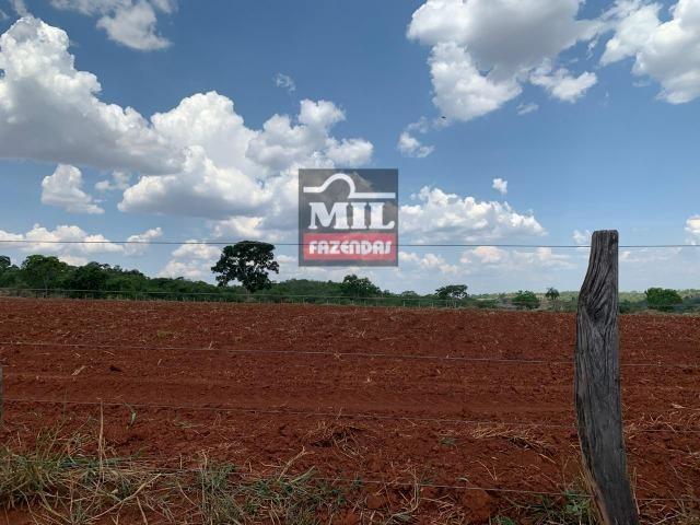 Fazenda 24 Alqueires ( 116.16 hectares )- Santa Cruz \ Cristianópolis-GO - Foto 3