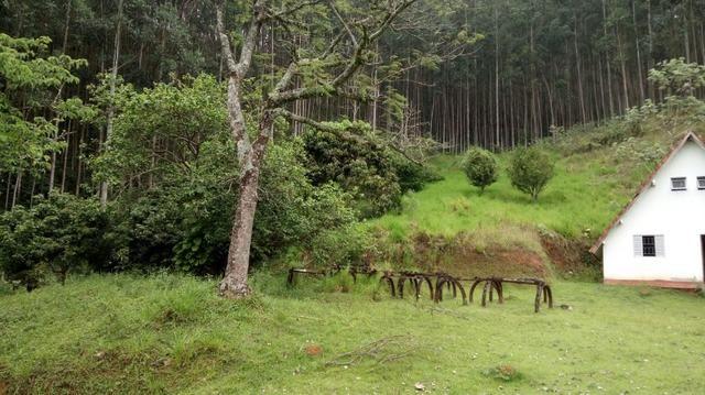 Fazenda com 400.000 Pés de eucaliptos,566 hectares - Foto 4