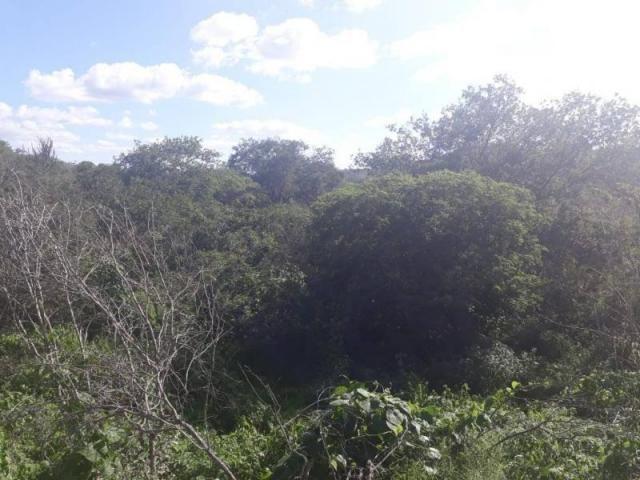 Fazenda para venda em santa cruz do capibaribe, centro - Foto 13
