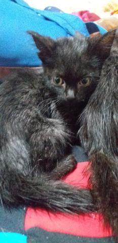 Doação Gatos Filhotes - Foto 3