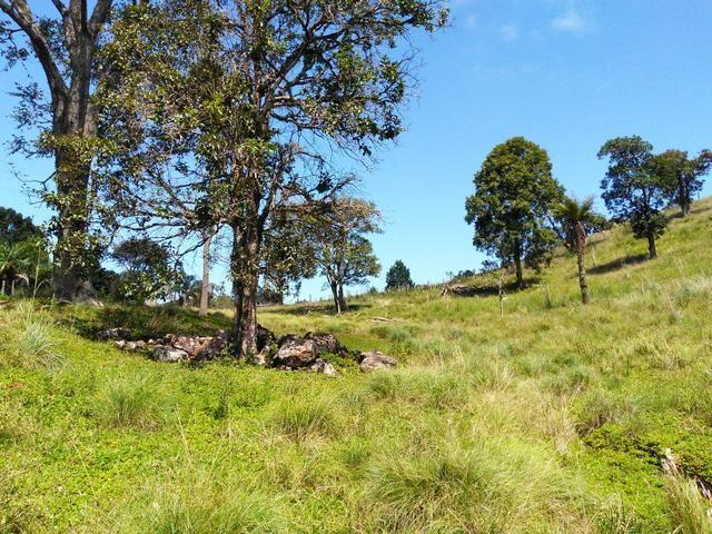 Fazenda de 123 Alqueires .40 Alq de Pasto . Guará ( Guarapuava PR ) - Foto 20
