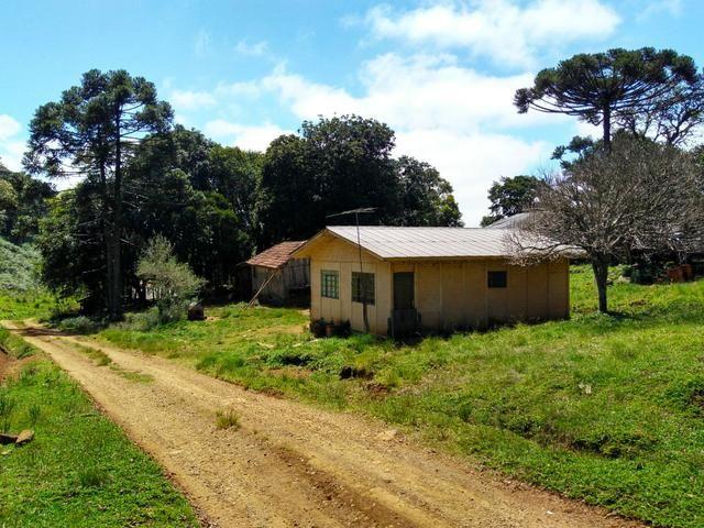 Fazenda de 123 Alqueires .40 Alq de Pasto . Guará ( Guarapuava PR ) - Foto 12