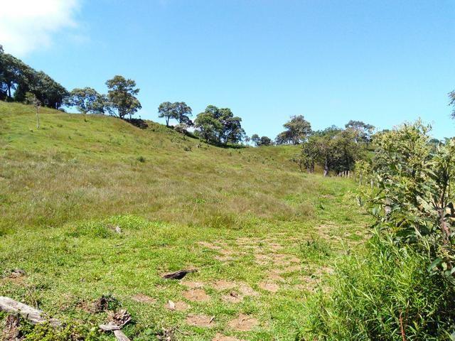 Fazenda de 123 Alqueires .40 Alq de Pasto . Guará ( Guarapuava PR ) - Foto 5