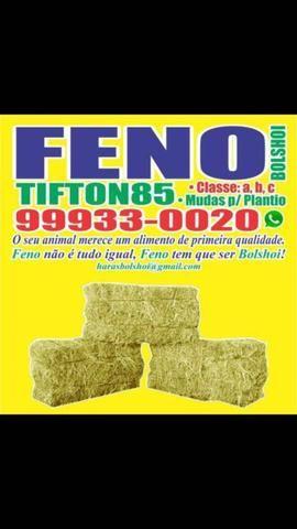 Feno tifton 85 - Foto 2