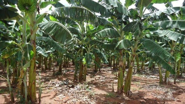 Vendo Fazenda com 250 ha, no Município de Touros - Foto 12