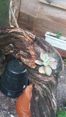 Arte em tocos, para plantas - Foto 4