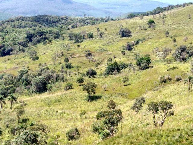 Fazenda de 123 Alqueires .40 Alq de Pasto . Guará ( Guarapuava PR )
