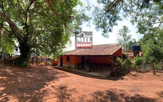 Fazenda 24 Alqueires ( 116.16 hectares )- Santa Cruz \ Cristianópolis-GO - Foto 2