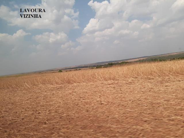 Fazenda venda ou arrendamento lavoura paranatinga - Foto 2