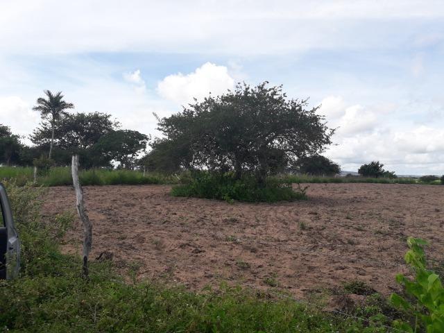Terreno em Bom Conselho - Foto 2