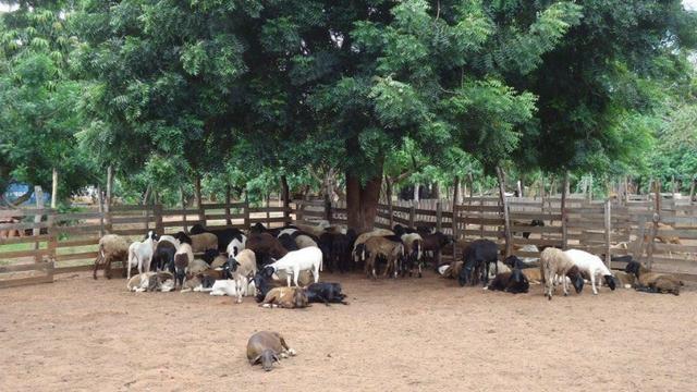Vendo Fazenda com 250 ha, no Município de Touros - Foto 17