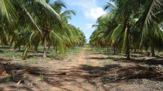 Vendo Fazenda com 250 ha, no Município de Touros - Foto 11