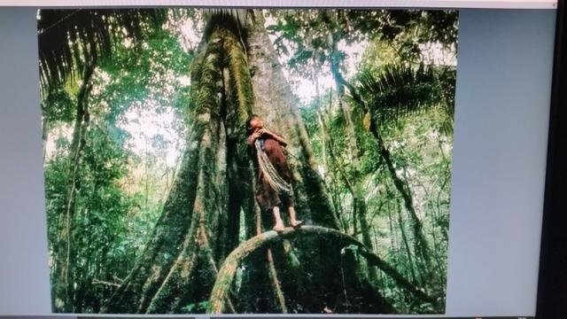 Fazenda na amazônia 913.000 hectares - Foto 15