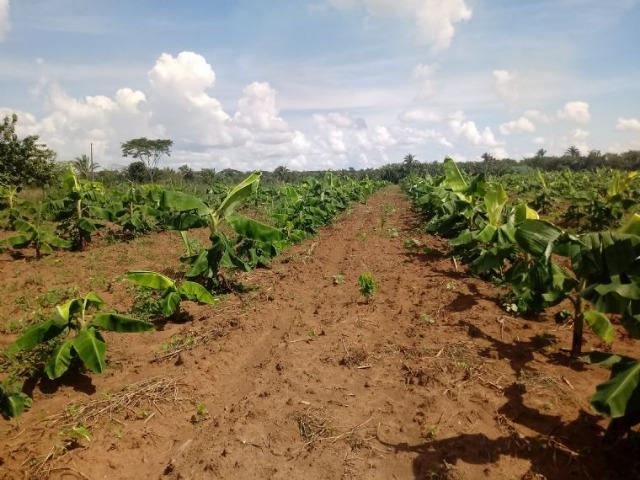Vendo uma fazenda em rosário oeste - Foto 5