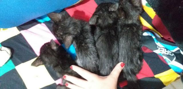 Doação Gatos Filhotes - Foto 5