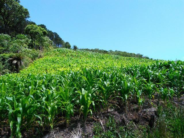 Fazenda de 123 Alqueires .40 Alq de Pasto . Guará ( Guarapuava PR ) - Foto 7