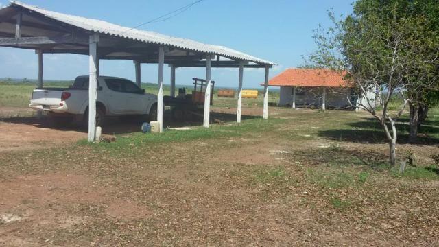 Fazenda em Pedro Afonso - 270 km Distante de Palmas - Foto 18