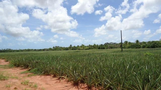 Vendo Fazenda com 250 ha, no Município de Touros - Foto 10