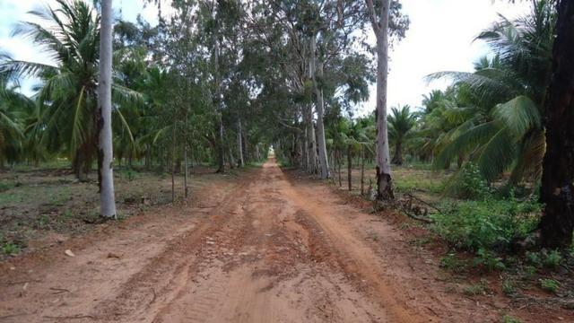 Vendo Fazenda com 250 ha, no Município de Touros - Foto 3