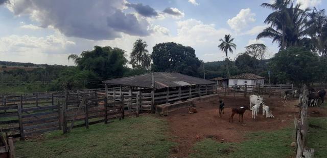 Fazenda 38 Alqueires em Bela Vista