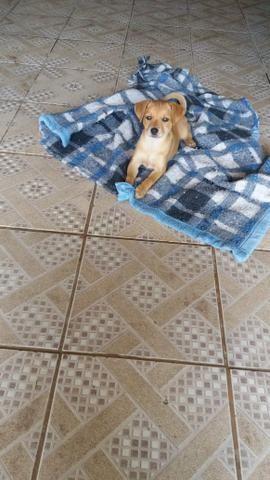 Cachorro 2 meses vacinado para doação