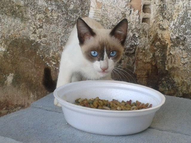 Doação gatinha - Foto 3