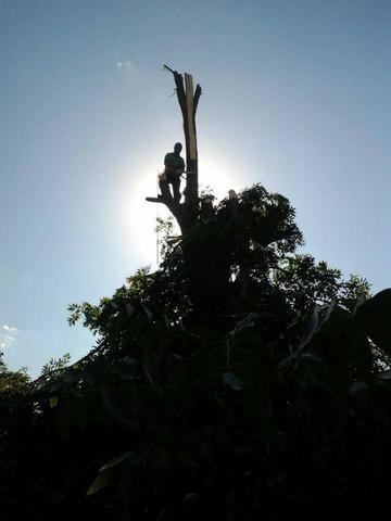 Corte de árvores em geral (remoção de alto risco), remoção de abelhas - JRK Prestação de S - Foto 5