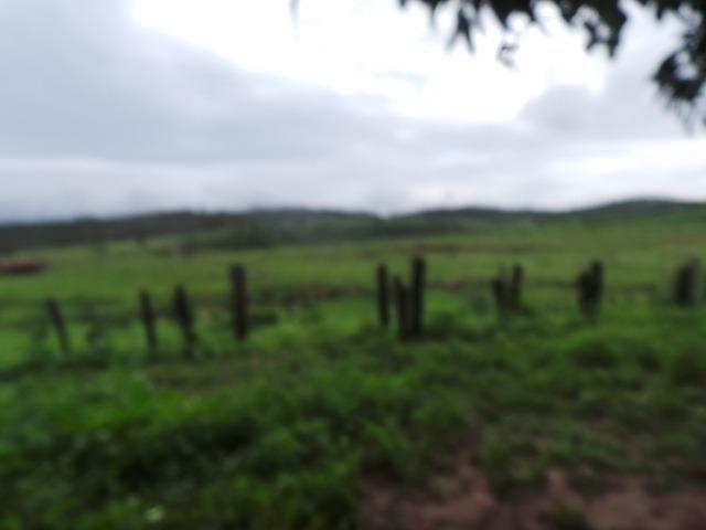 Fazenda 7.5 Alqueires Municipio Cocalzinho terra Cultura