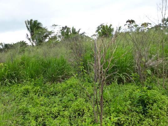 Terreno comunidade cacimbinha km26 curua- un