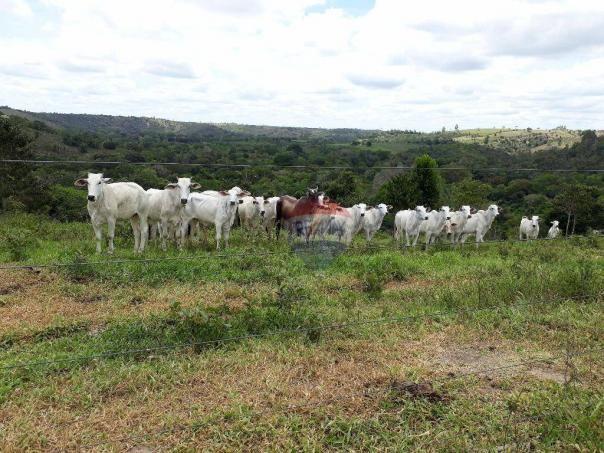 Fazenda à venda em Porto Seguro (Vera Cruz), Bahia - Foto 18