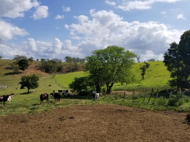 Fazenda a venda no extremo sul da bahia 170 ha - Foto 5