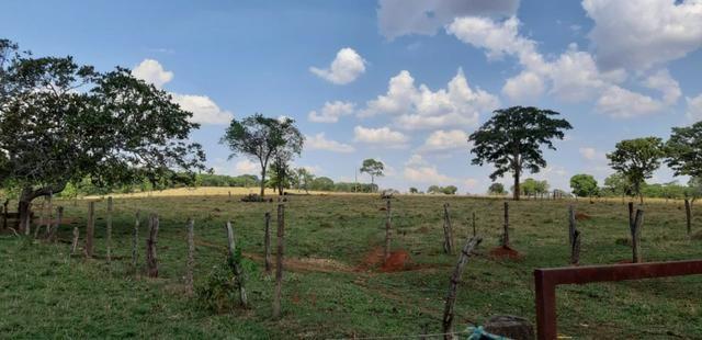 Fazenda 38 Alqueires em Bela Vista - Foto 3