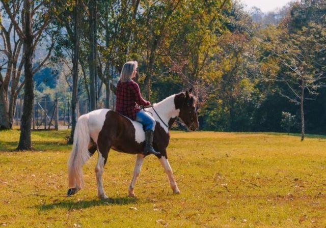 Lindo cavalo Tubiano