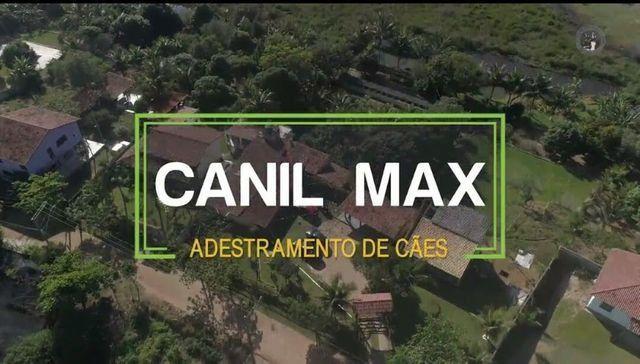 Canil max
