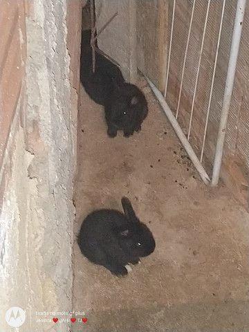 Vendo ou troco filhotes de coelhos por algo do meu interesse - Foto 4