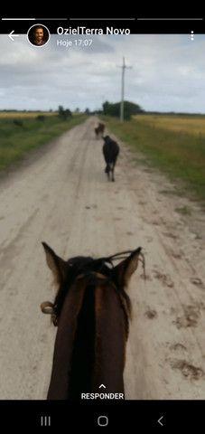 Venda permanente cavalos - Foto 3