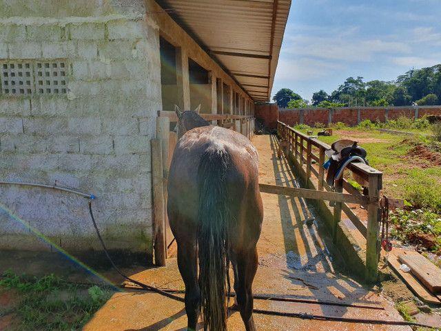 Vendo Cavalo 7/8 QM - Foto 4