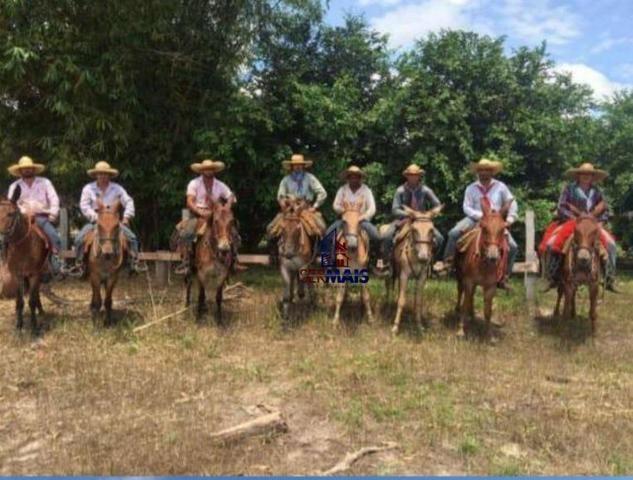 Belíssima fazenda a venda na divisa de Rondônia com o estado de mato grosso - Foto 13