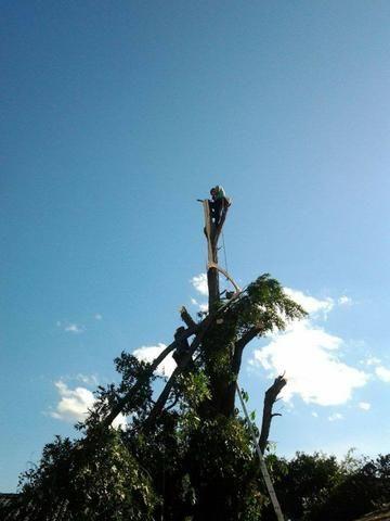 Corte de árvores em geral (remoção de alto risco), remoção de abelhas - JRK Prestação de S - Foto 6