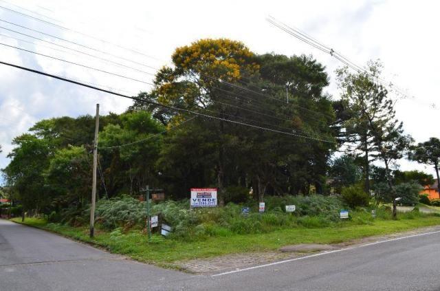 Terreno à venda, 5000 m² por r$ 3.500.000,00 - vila suica - canela/rs