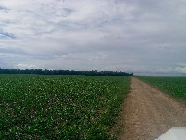 Fazenda em Itanhanga-MT