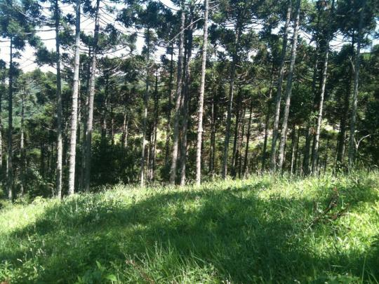 Terreno à venda, 800 m² por r$ 478.800,00 - condomínio aspen mountain - gramado/rs - Foto 4