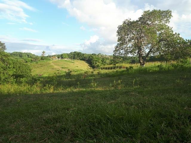 Sítio com 11.67 hectares em Igarassu/PE - Foto 13