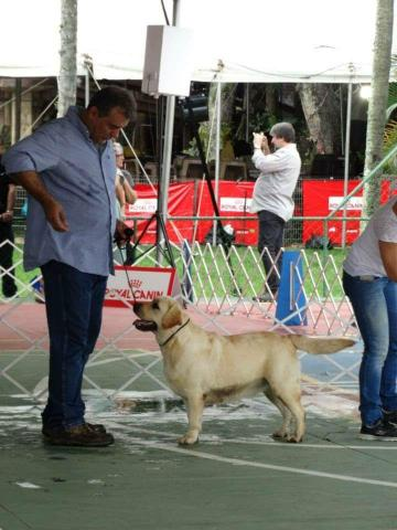 Labrador alto padrao - Foto 3